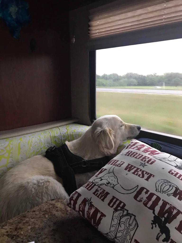 This image has an empty alt attribute; its file name is rv-finn-in-the-window.jpg