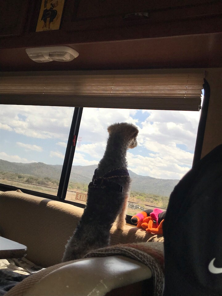 This image has an empty alt attribute; its file name is rv-pepe-enjoying-the-view.jpg