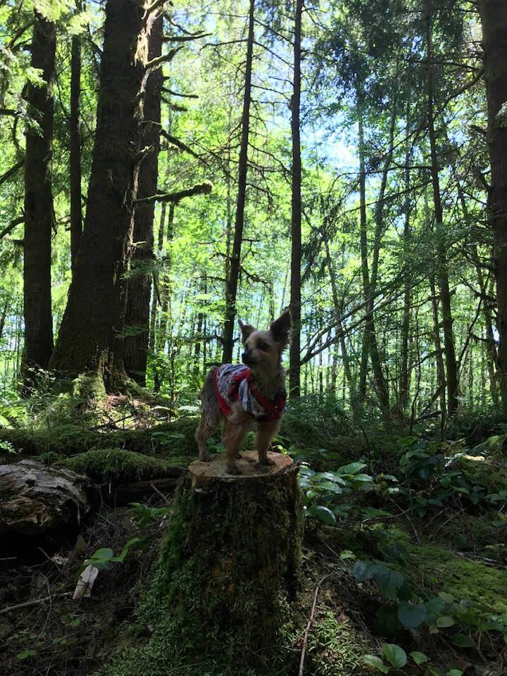 This image has an empty alt attribute; its file name is rv-mimi-on-tree-stump-olym-natl-forest.jpg