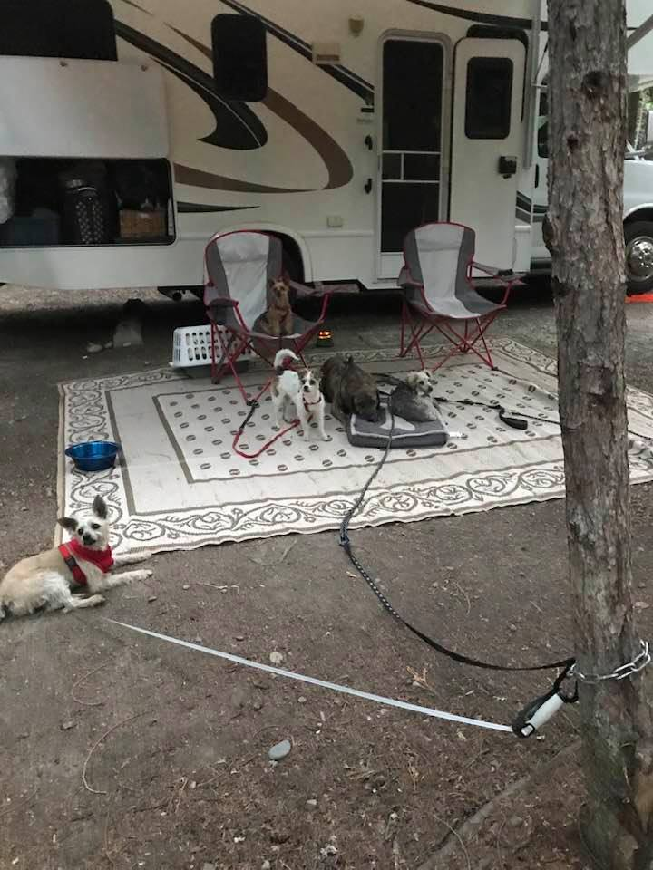 This image has an empty alt attribute; its file name is rv-july-6-furbabies.jpg